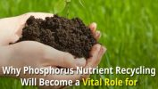 Phosphorus Nutrient Recycling Role for Anaerobic Digestion