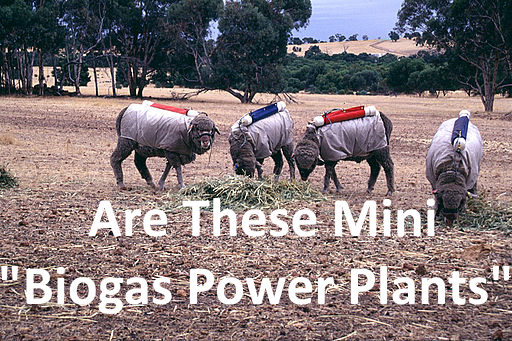 What is a Biogas Power Plant? Do Sheep Make Cooking Gas?